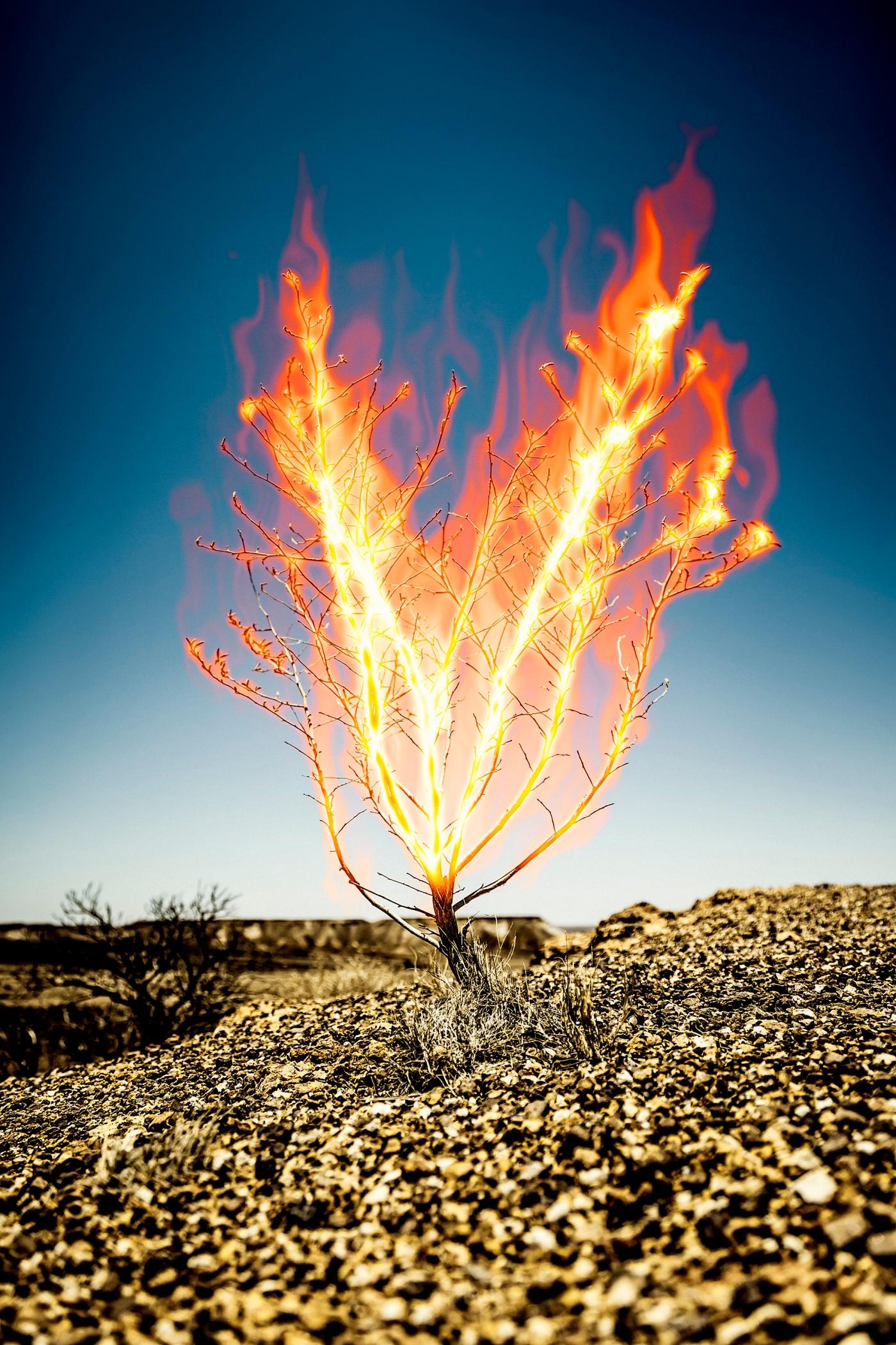 day 24 u2013 ignoring the burning bush u2013 aaron schafer blog